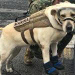 メキシコ地震の被災地で活躍する救助犬Fridaフリーダと、私の犬オタクだった幼少期
