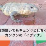 爬虫類嫌いでもキュン♡としちゃう?カンクンの「イグアナ」